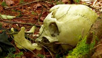 Die eindringliche Doku folgt einem Geologen durch den Suicide Forest. Seit Jahren begegnet er hier Suizidgefährdeten. Und viel zu oft auch bereits Toten.