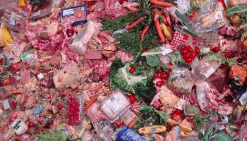 """Schonungslos zeigt """"Taste the Waste"""" die ökologischen und ökonomischen Konsequenzen unseres verschwenderischen Umgangs mit Nahrungsmitteln."""