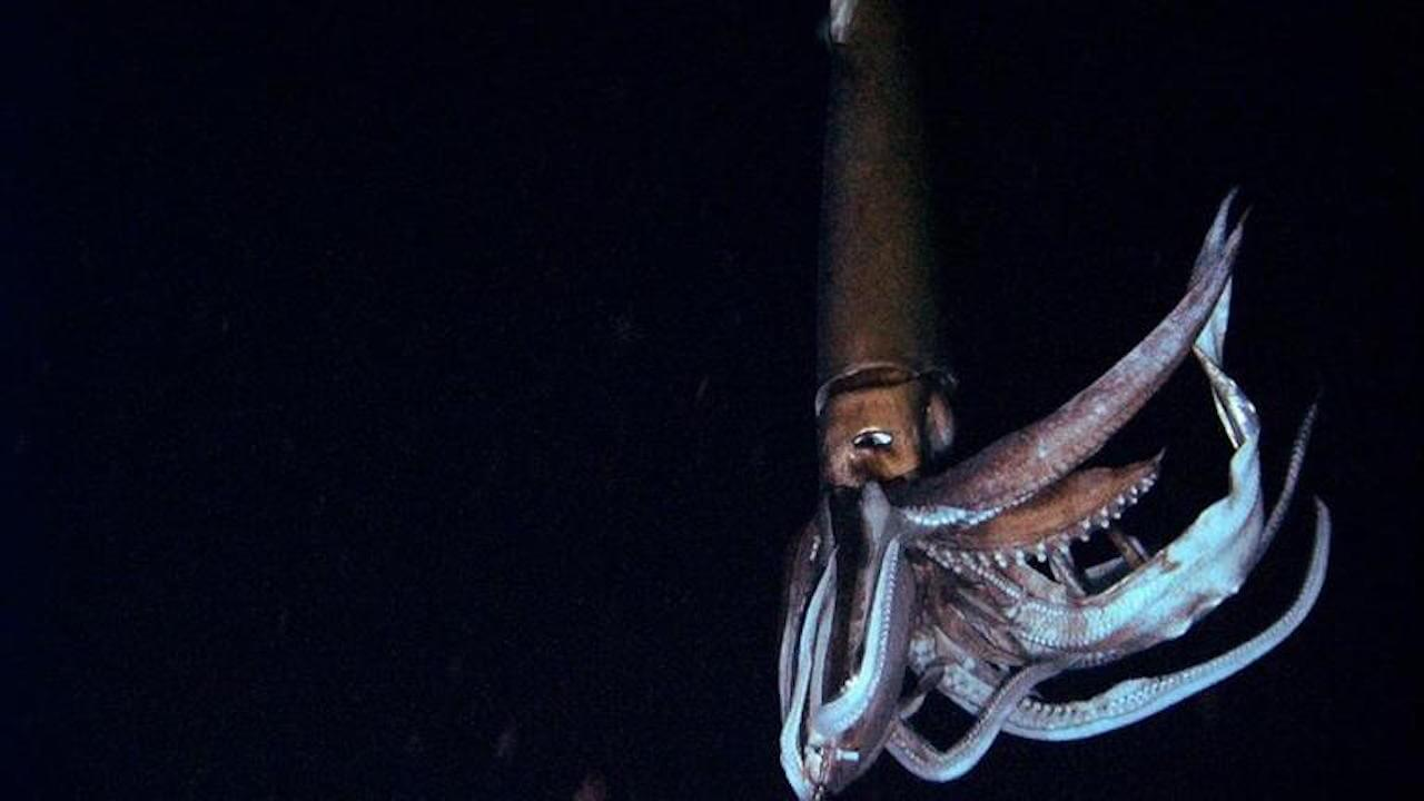 das phantom der tiefsee