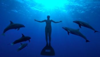 Der oscarprämierte Dokumentarfilm 'Die Bucht' begleitet den Tierschutzaktivisten Ric O'Barry bei seinem Kampf gegen das Morden von Delfinen in Japan.