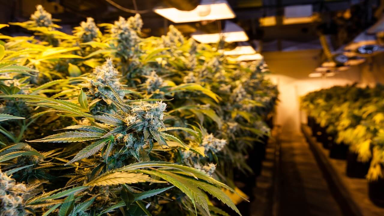 """'Hasch-Boom in Amerika' berichtet über den """"Green Rush"""" in Colorado, der längst zum Business-Rausch geworden ist."""