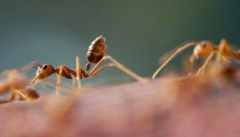 Insekten, Superhelden auf sechs Beinen – eine Doku mit innovativen Erkenntnissen aus der Welt der Insekten.