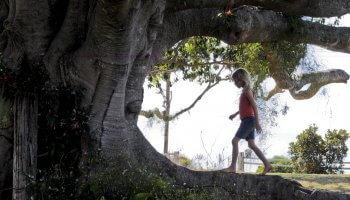 In dem rührenden Drama The Tree mit Charlotte Gainsbourg lebt der verstorbene Familienvater Peter O'Neil in einem Feigenbaum weiter.
