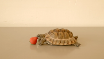 This Tortoise Could Save a Life - Ft. Alan Rickman
