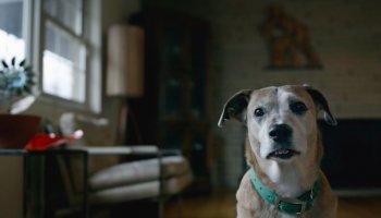 In dem Kurzfilm zur Webserie Downward Dog erhält der Zuschauer amüsante Einblicke in die Gedankenwelt eines Hundes