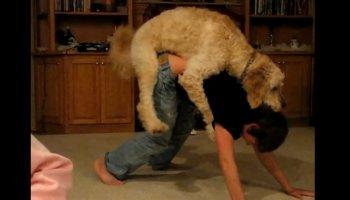 Hund besteigt Kind zu Weihnachten