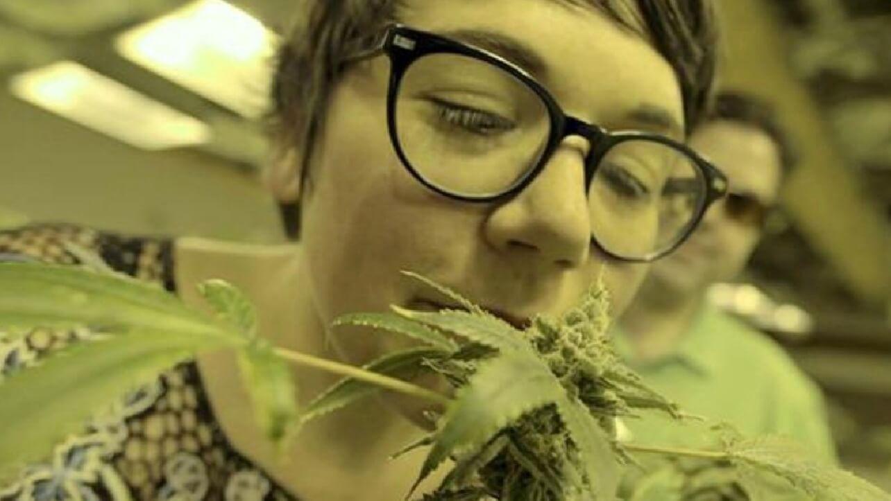 In 'Kiffende Mütter' geht ein Mum nach Colorado, um dort an einer auf sie zugeschnittenen Marihuana-Tour teilzunehmen.