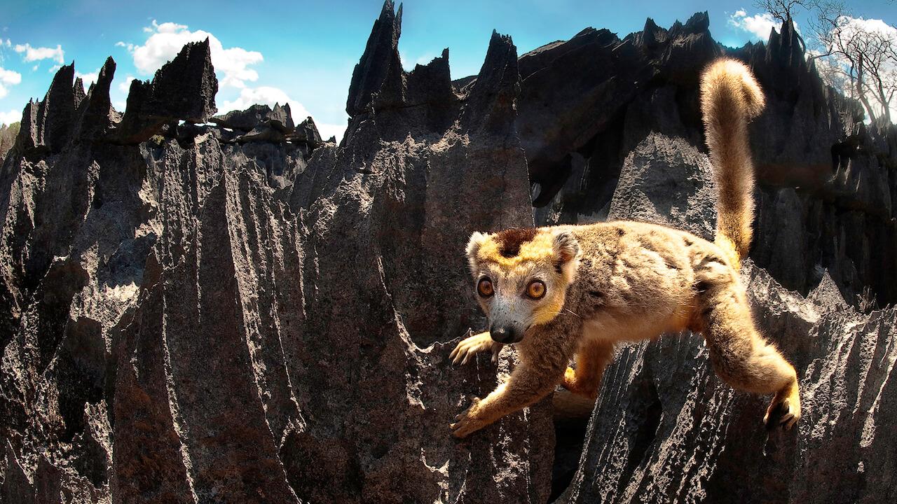 Die Madagaskar Doku zeigt uns die verschiedenen Facetten der tropischen Insel, die von saftigen Waldoasen bis hin zu steinige Mondlandschaften reichen.