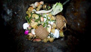 Schonungslos zeigt Taste the Waste die ökologischen und ökonomischen Konsequenzen unseres verschwenderischen Umgangs mit Nahrungsmitteln.